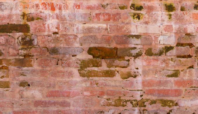Damp brick wall with green algae